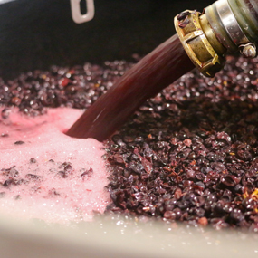 The pumping over of our Pinot Noir grapes in Sancerre