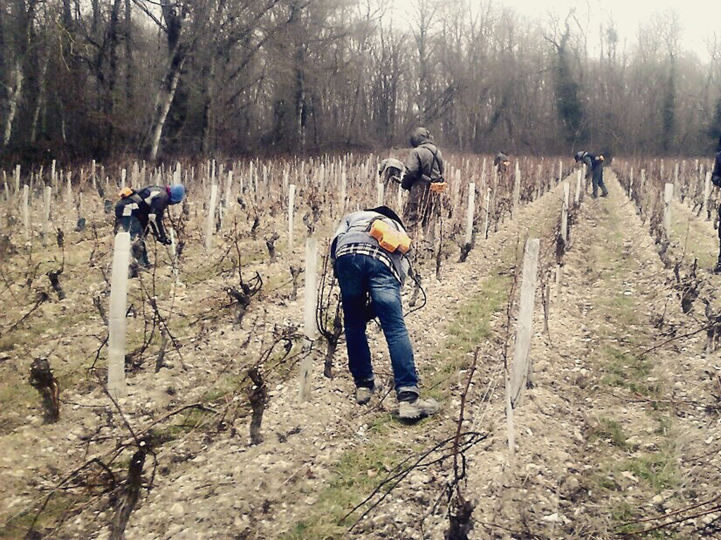 The pruning experience at La Perrière